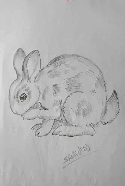 Rabbit sketch by Sheli Dey